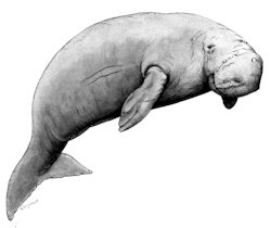 Dugong image courtesy of the Great Barrier Reef Marine Park Authority